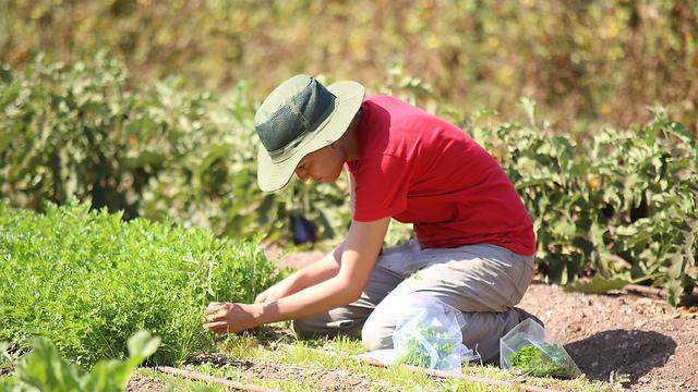 """חקלאות בשירות הקהילה. עמותת """"קיימא"""" (צילום: באדיבות החווה) (צילום: באדיבות החווה)"""