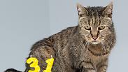 צילום: Westway Veterinary Group