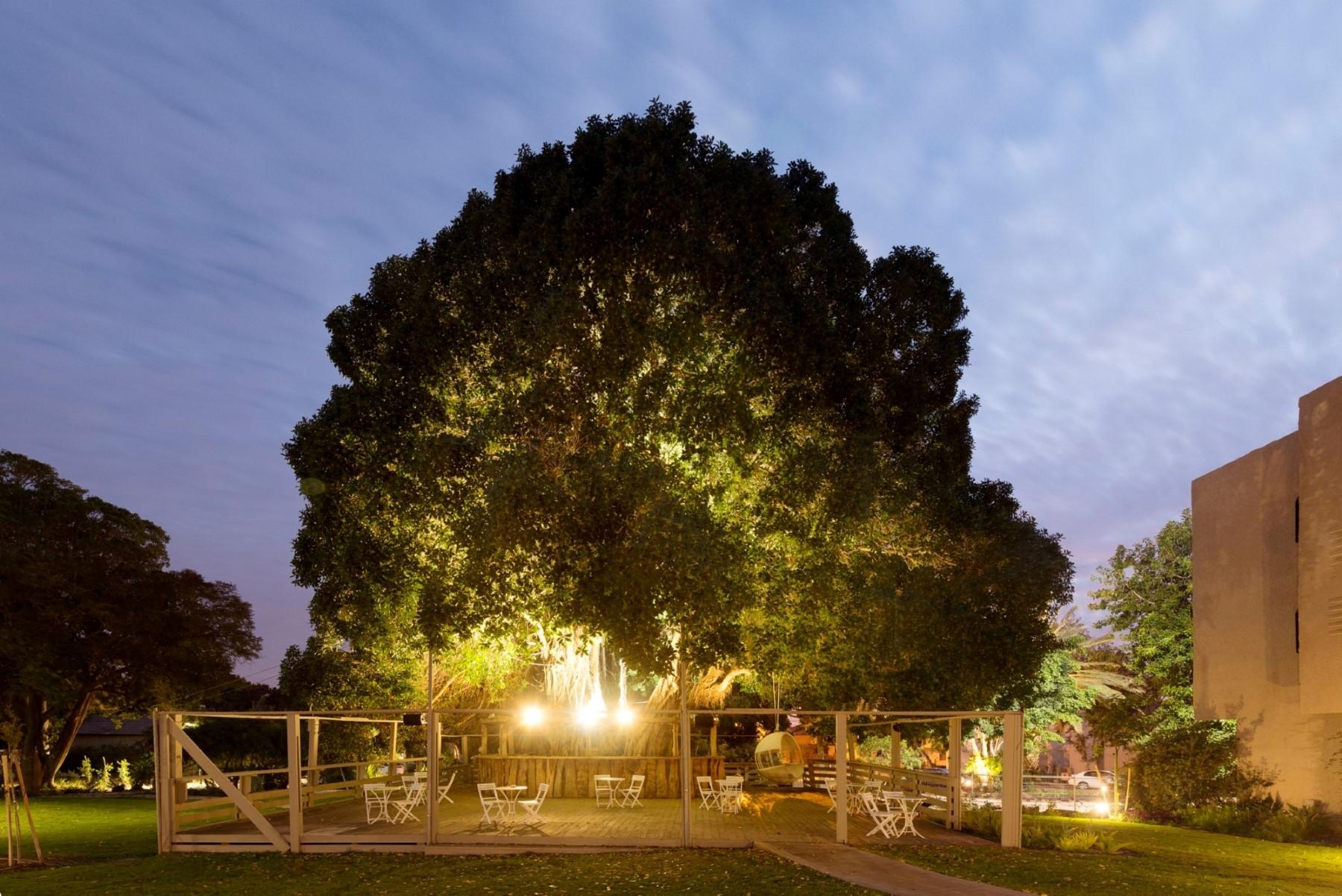 רחבת הדק סביב העץ הגדול בין המבנים השונים בניאה (צילום: גדעון לוין) (צילום: גדעון לוין)