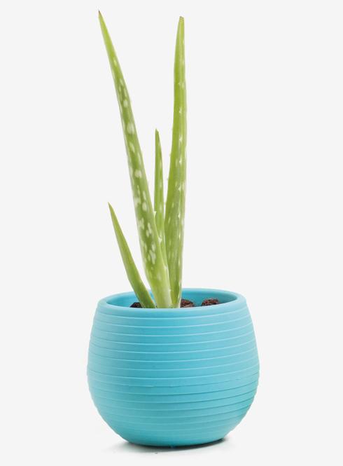 לא רק ירוק (צילום: Shutterstock)