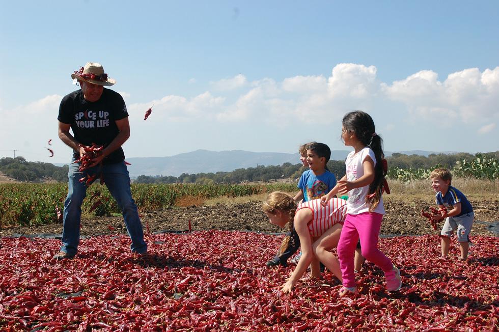 פסטיבל הפפריקה בחוות התבלינים בבית לחם הגלילית (צילום: נועה אבן חיים)