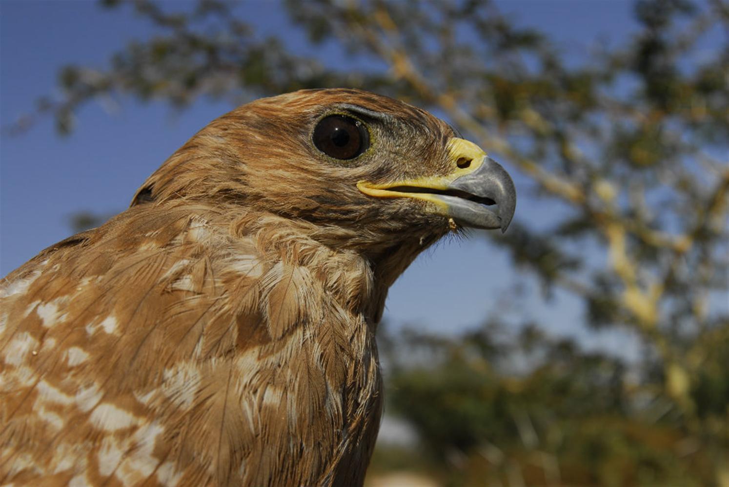 סוכות עם ציפורים: פארק הצפרות באילת (צילום: רונן וטורי)