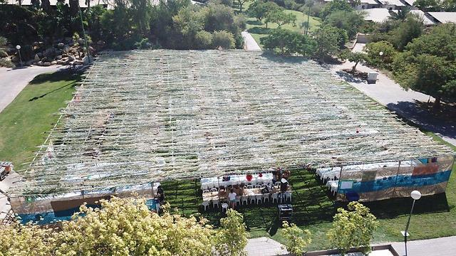 The world's largest sukkah in Yotvata, sized 504 square meters and hosting 1,300 people (Photo: Rom Carmi) (Photo: Rom Carmi)