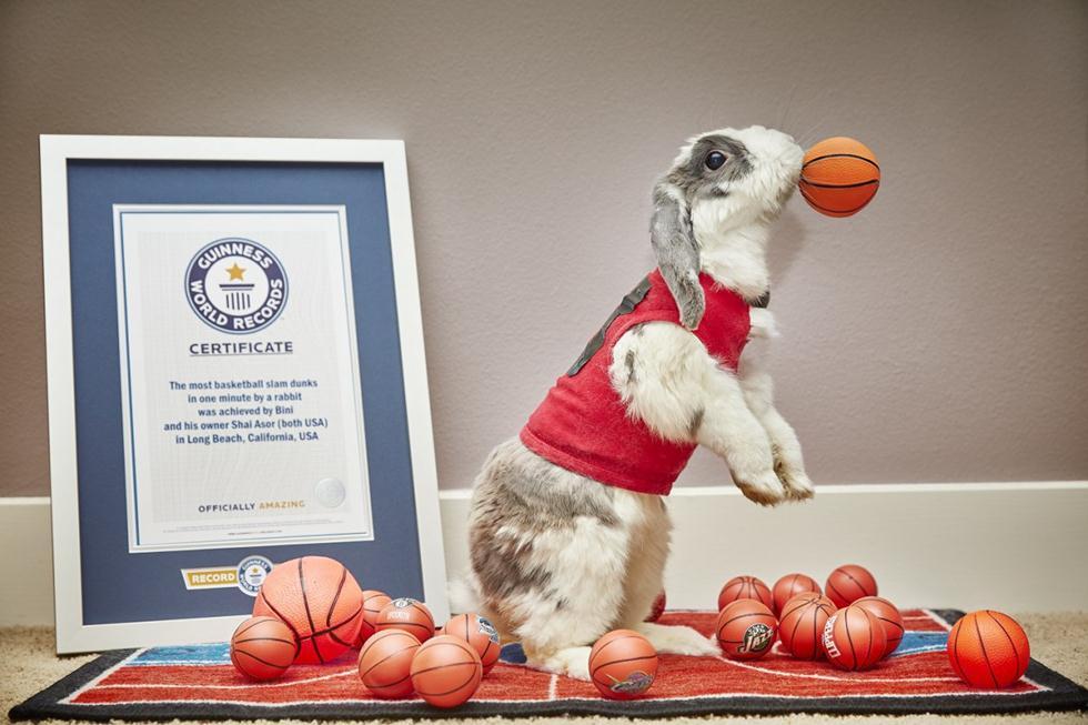 (צילום: Guinness World Records) (צילום: Guinness World Records)