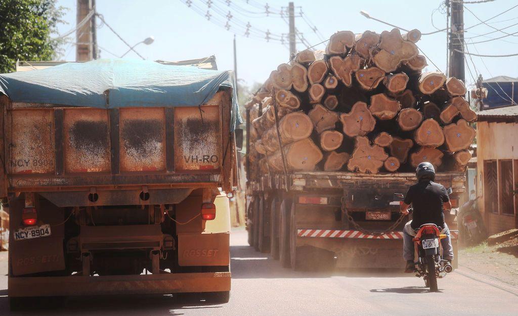 בירוא היערות (צילום: Gettyimages)