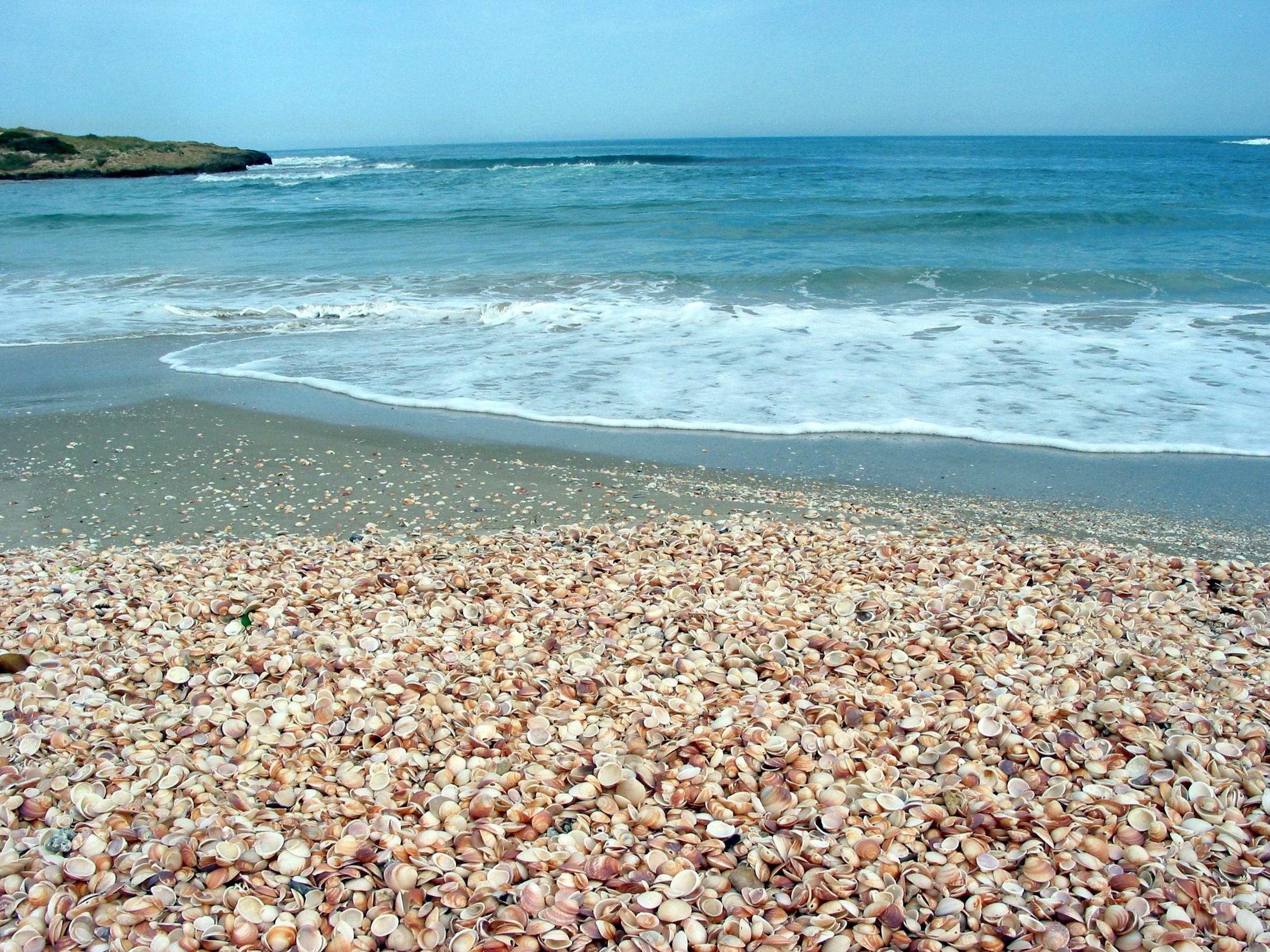מפרץ הצדפים בחוף הבונים (צילום: רשות הטבע והגנים)