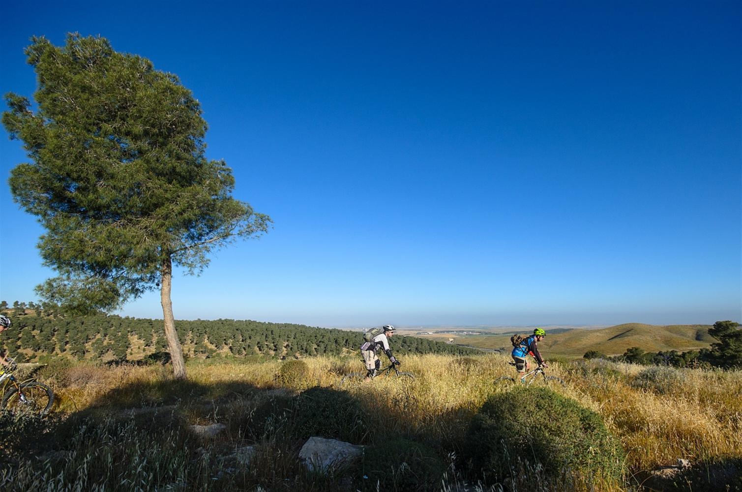 """היער עם המסלול המעגלי """"סינגל אלון"""", יער להב (צילום: אילן שחם, מתוך ארכיון קק""""ל)"""