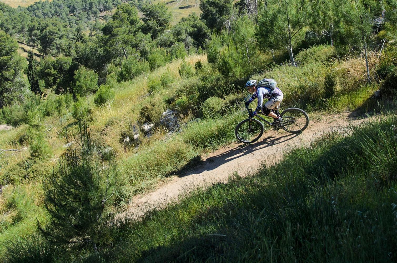 """אוהבים לרכוב על אופניים? יער להב (צילום: אילן שחם, מתוך ארכיון קק""""ל)"""
