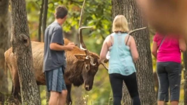 התקרבו יותר מדי. האישה עם החולצה הוורדה נפגעה (צילום: קנט בורג'ס ) (צילום: קנט בורג'ס )