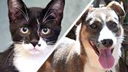 """צילום: ראשון אוהבת חיות, חיים שוורצנברג, צער בעלי חיים בישראל - ת""""א"""