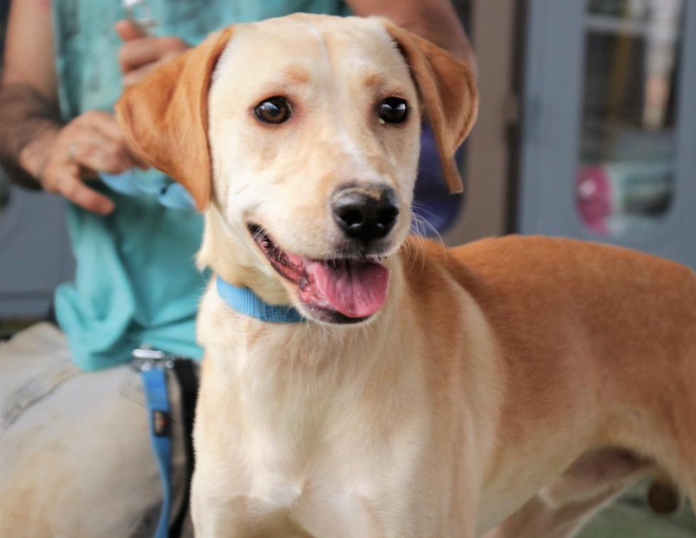טיטו (צילום: DOGS R US) (צילום: dogs 4 us)