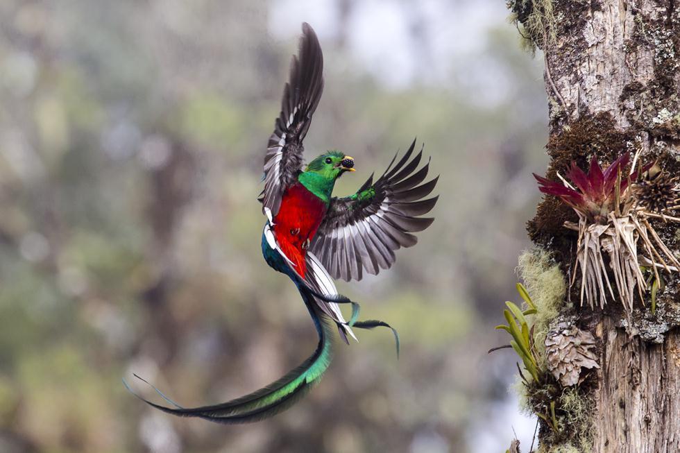 (צילום: ©  Tyohar Kastiel - Wildlife Photographer of the Year 2017) (צילום: ©  Tyohar Kastiel - Wildlife Photographer of the Year 2017)