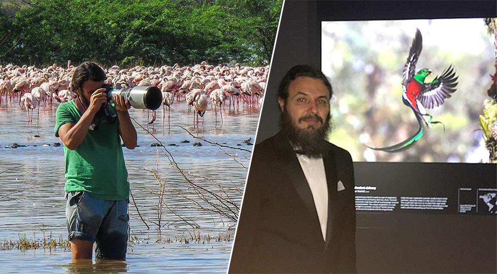 (ימין) טיוהר קסטיאל על רקע הצילום של הקצאל בתערוכה בלונדון  | טיוהר קסטיאל בפעולה בטבע על רקע הפלמינגו באפריקה (צילום: Chandani Bakeeff) (צילום: Chandani Bakeeff)