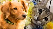 צילום: נטלי פוקס, חבר לי | הכלבים שבצל