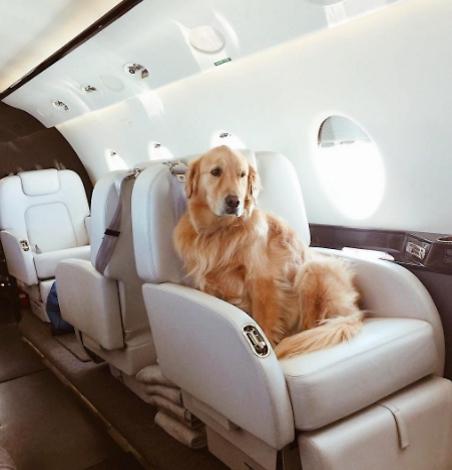 אפשר להביא אפילו את הכלב (צילום: מתוך אינסטגרם)