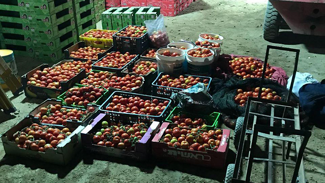 Some of the produce suspects allegedly intended to steal