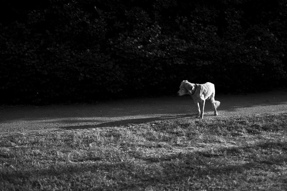 ביום שבו ירדתי עם מילקי למטה, החלטתי לקחת מצלמה ולתעד את מה שעובר עליו (צילום: בר סטפנסקי)