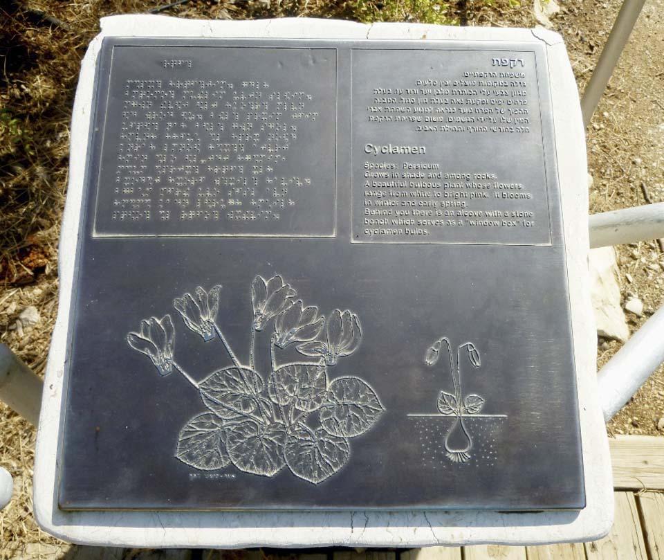 Так выглядит описание цикламенов, цветущих тут зимой