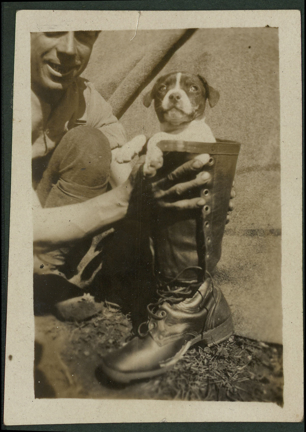 A puppy finds a new home (Photo: National Library of Israel)