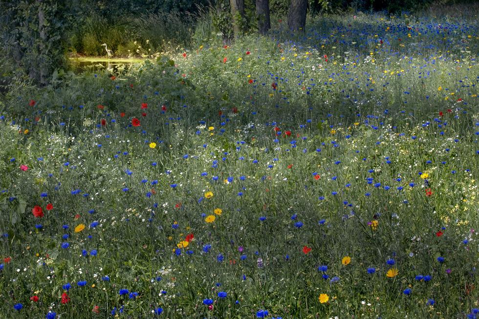 אנפה בשדה פרחים בצרפת, 2009 (צילום: Jim Brandenburg | Fritz Steiniger Award 2017 | GDT)
