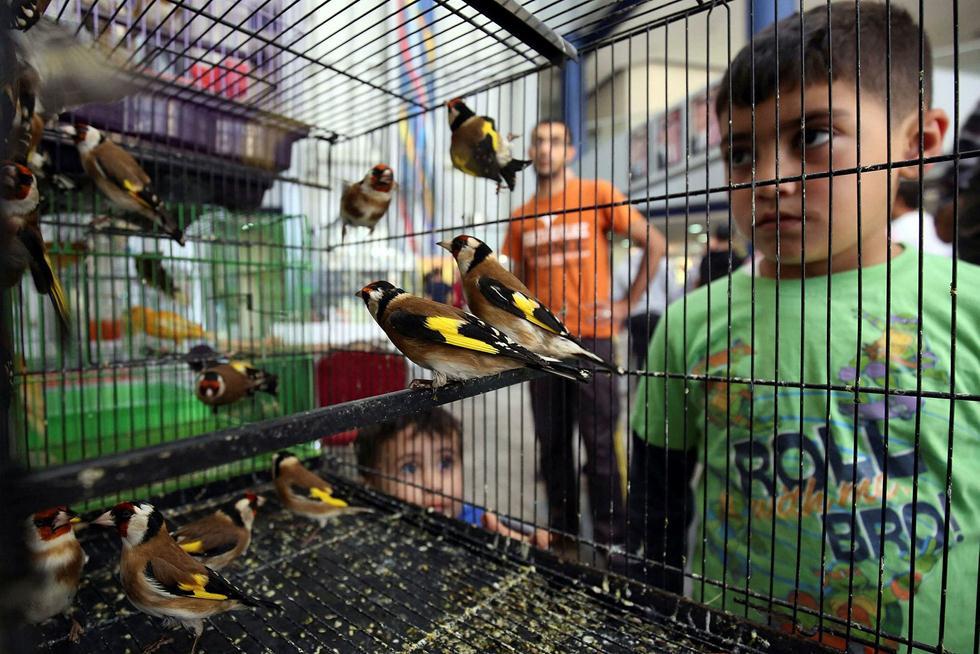 (צילום: AFP / KHALIL MAZRAAWI)