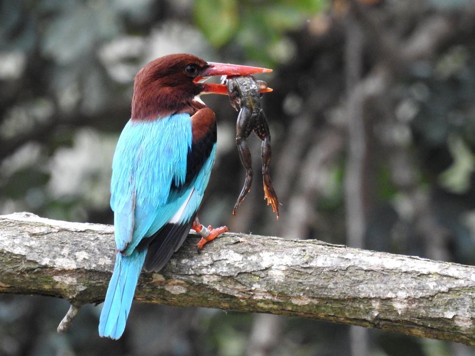 (צילום: דב גרינבלט, החברה להגנת הטבע) (צילום: דב גרינבלט, החברה להגנת הטבע)