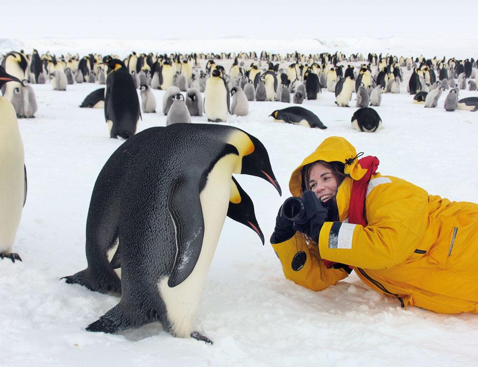 """דפנה בן נון באנטארקטיקה  עם הפינגווינים קיסריים.  """"צריך לעמוד במרחק של לפחות עשרה מטרים מהם בלי תזוזה, כדי לא להפחיד אותם. אחרי שהם ראו שאני לא מסוכנת, הם עצמם התקרבו אליי עם הגוזלים"""" (צילום: דפנה בן נון)"""