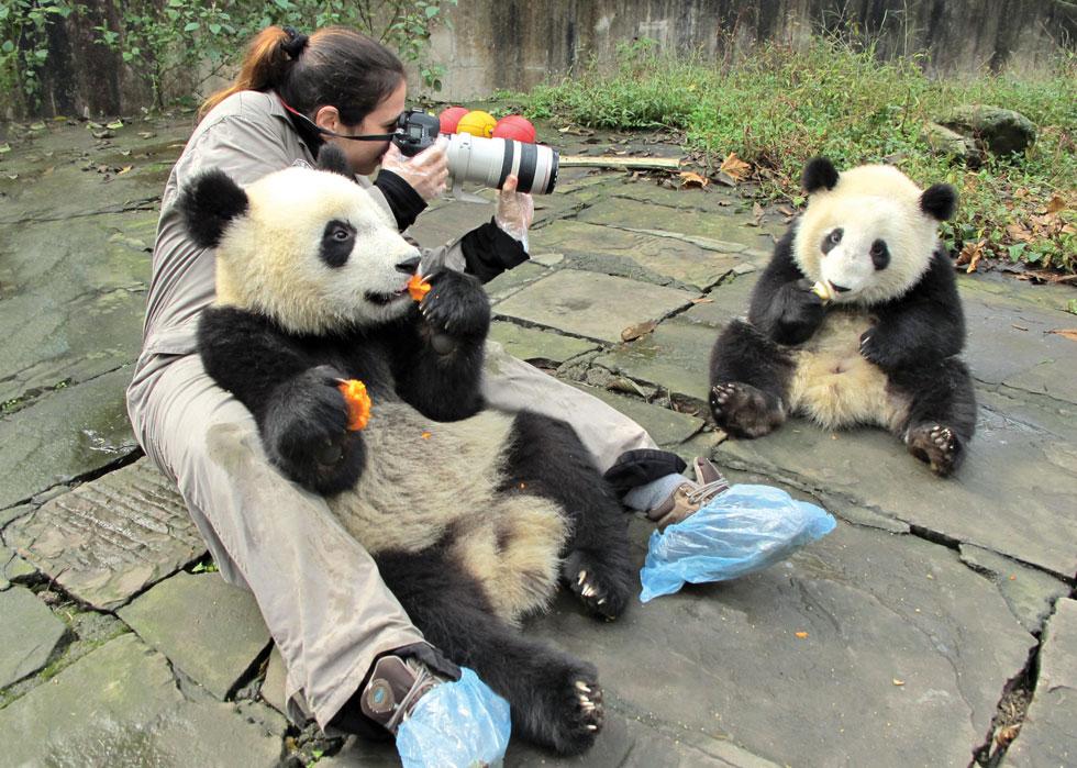 """בסין עם דובי פנדה. """"השומר שהיה שם כל הזמן ביקש ממני להמשיך לזוז ולא להישאר מול הפנדות לאורך זמן. אז הלכתי וחזרתי שוב ושוב, ובשלב מסוים התעלמתי ממנו והמשכתי לצלם את הגורים בתוך הלול שלהם"""" (צילום: דפנה בן נון)"""