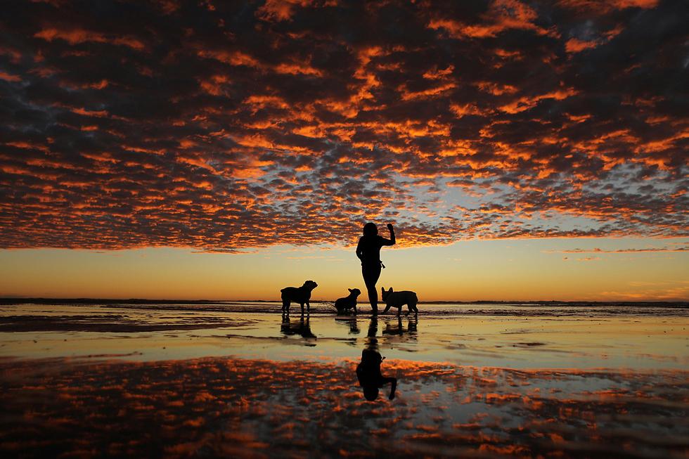אישה משחקת עם שלושת כלביה בחוף הים בדל מאר, קליפורניה (צילום: רויטרס) (צילום: רויטרס)