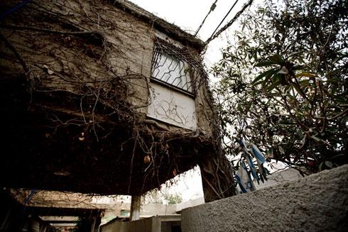 השכונה לדוגמה (שכונה ה' הישנה) בבאר שבע. קוטג'ים עוטפים את המשעולים ומעניקים צל (צילום: רועי אבנטוב)