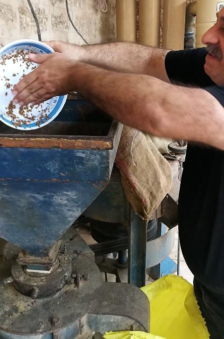 """""""פעם, כשלא היו מכונות להפרדת הבורגול, היו מנפים את התערובת בנפה מיוחדת"""" (צילום: מיכל וקסמן)"""