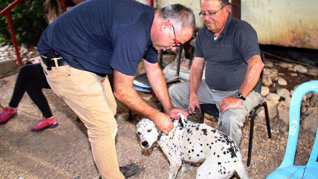 חיסונים לכלבים מקומיים ברמת צבי (צילום: המועצה האזורית גלבוע)