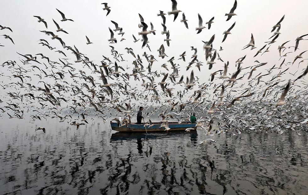 גברים מאכילים שחפים  בנהר יאמונה, ניו דלהי (צילום: רויטרס) (צילום: רויטרס)
