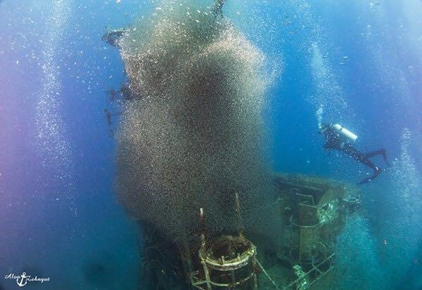 מערבולת דגים, אילת (צילום: אלון צנגוט) (צילום: אלון צנגוט)