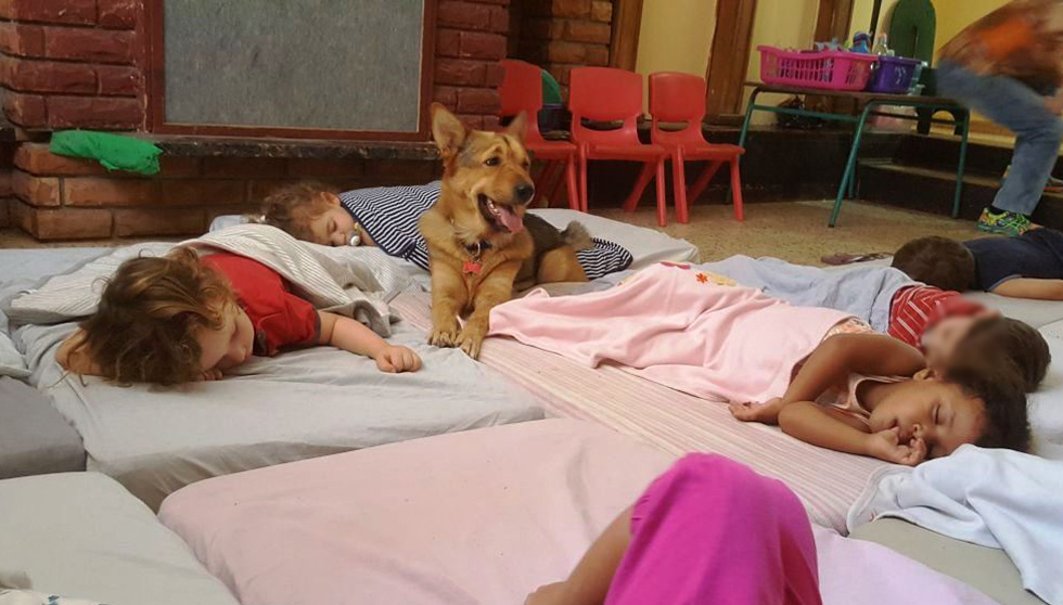 לונה, עוזרת הגננת הנפלאה על ארבע בגן של תומאס, הבן שלי - משגיחה ועוזרת לילדים להירדם