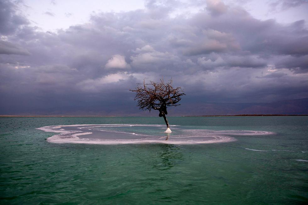 עץ מוקף במלח ליד עין בוקק, ים המלח (צילום: EPA) (צילום: EPA)
