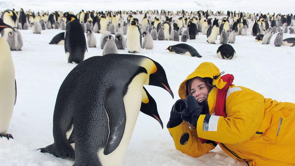 דפנה בן נון נסעה לקצה העולם כדי לצלם פריים מושלם של פינגווין