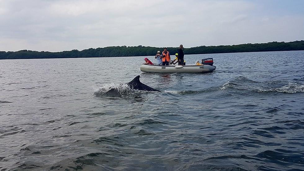 לשוט הכי קרוב לדולפינים בפרבר פוארטו מורו (צילום: חגי גת) (צילום: חגי גת)