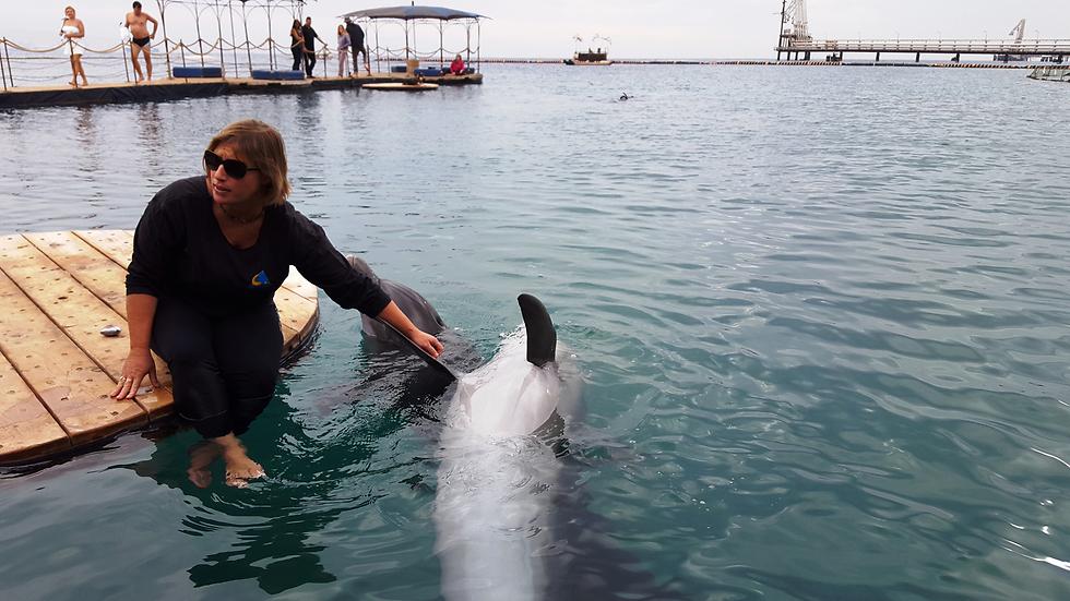 ריף הדולפינים (צילום: אלי פרכטר) (צילום: אלי פרכטר)