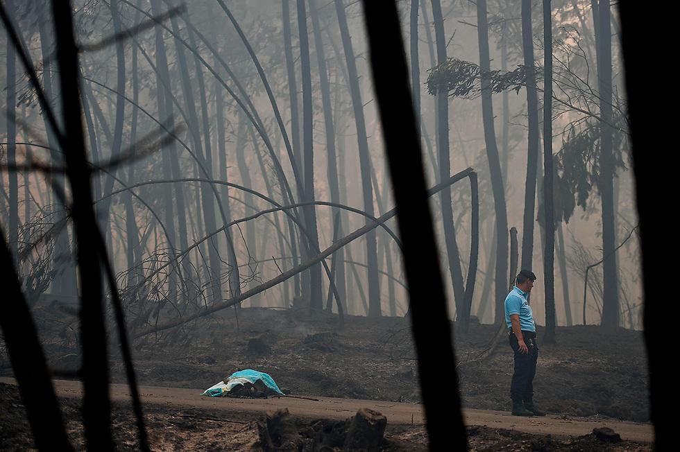 שוטר ניצב ליד גופת הרוג בשריפה בפדרוגאו, פורטוגל. גם פורטוגל התמודדה השנה עם שריפות ענק, והן גרמו ליותר מ-60 הרוגים וטלטלו את הפוליטיקה המקומית (צילום: AFP)