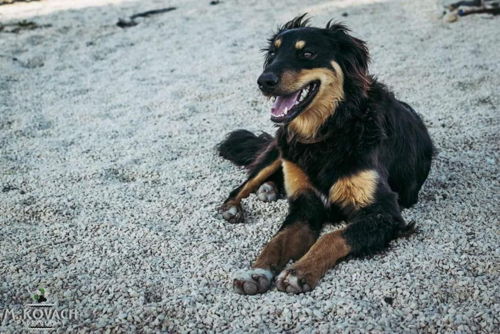 (צילום: הכלבים שבצל) (צילום: הכלבים שבצל)