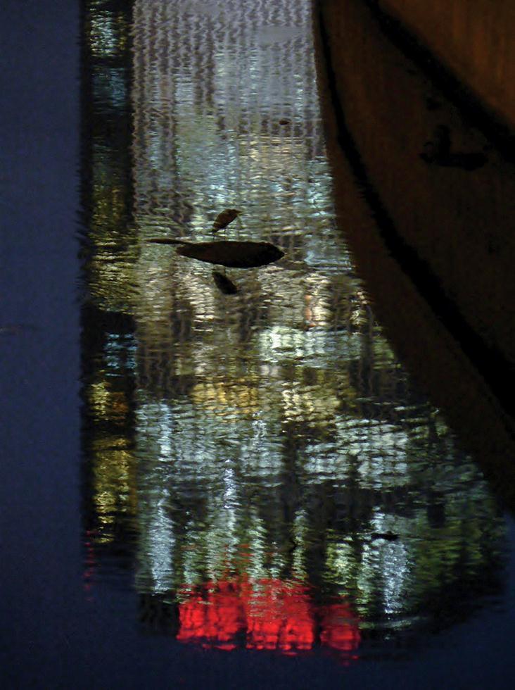 אנפה אפורה על השקתפות מגדלי עזריאלי (צילום: מיטב אשכנזי)