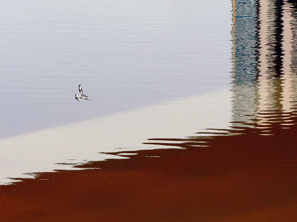 פרפור עקוד בין השתקפויות הבטון (צילום: מיטב אשכנזי)