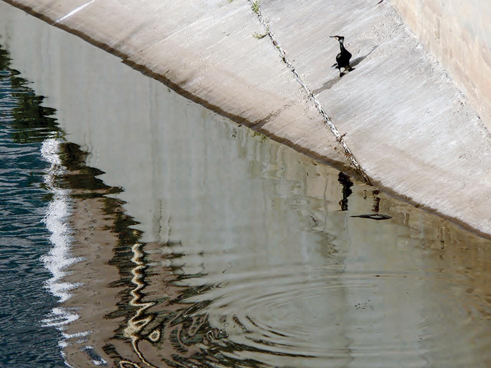 קומורן על שיפוע הבטון שלמרגלות החומה המזרחית (צילום: מיטב אשכנזי)