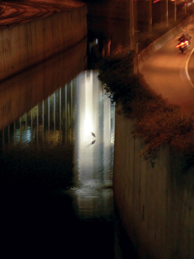 אנפה אפורה על רקע השתקפות בורסת היהלומים (צילום: מיטב אשכנזי)