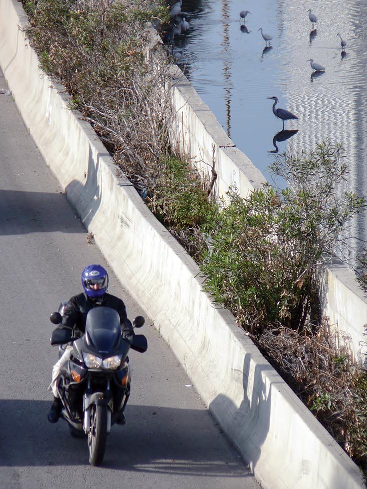 העיר והנחל. רוכב דו גלגלי על רקע עופות המים בנחל (צילום: מיטב אשכנזי)