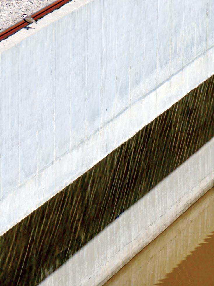 סיקסק על ראש החומה המערבית, מצפון לגשר מוזס (צילום: מיטב אשכנזי)
