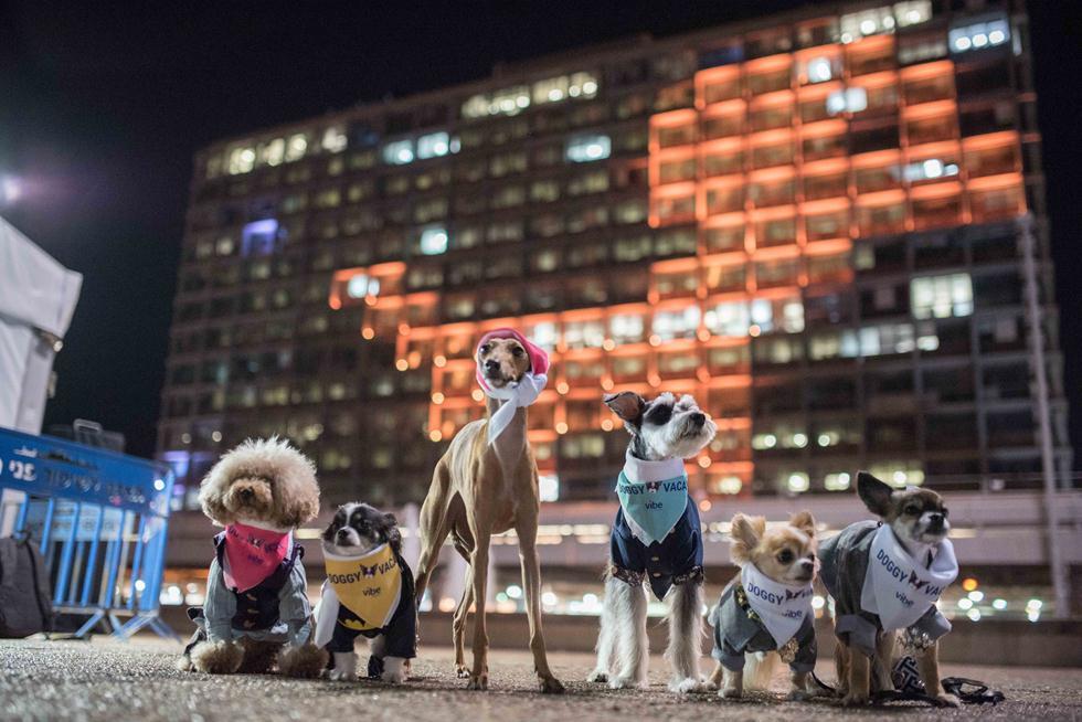 (צילום: אור קפלן, באדיבות Vibe Israel) (צילום: אור קפלן, באדיבות Vibe Israel)
