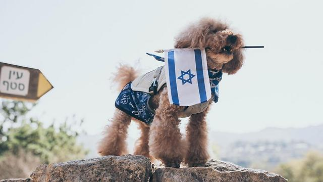 Israel puppy love (Photo: Or Kaplan, courtesy Vibe Israel)