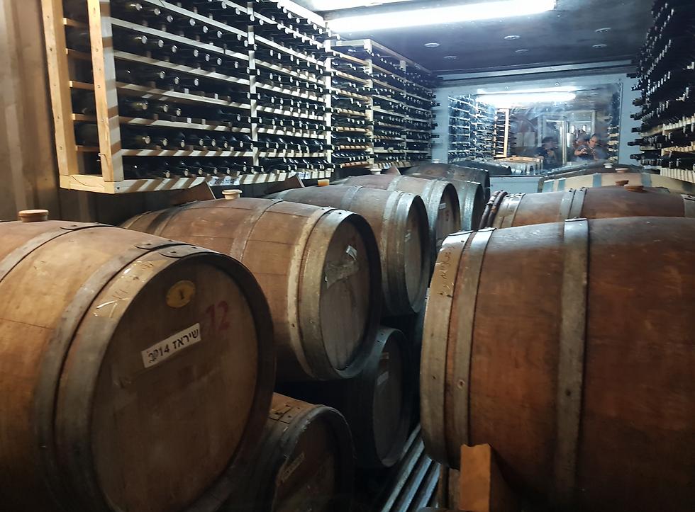 חבית יין ביקב ענתות (צילום: אלי פרכטר) (צילום: אלי פרכטר)